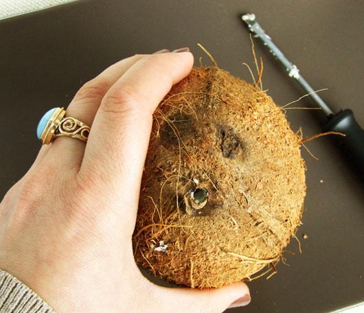 nuca de cocos gaurita