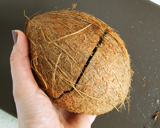 nuca de cocos sparta
